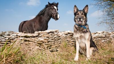 Szolgálati nyugdíj rendőrlovaknak és -kutyáknak